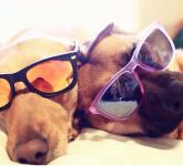 犬の目の病気は?目やに、チェリーアイなど目の病気と症状
