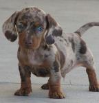 ミックス犬の種類と特徴!セレブに愛されオンリーワンが魅力