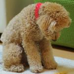 犬が足や体を舐める意味は?ほっておいていい??