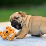 犬のおもちゃの選び方!噛む理由は?管理の仕方はどうする?