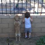 愛犬にリーダーと認めさせるには?リーダーシップはどうとる?