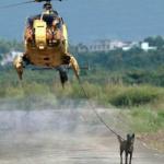 愛犬が散歩中にリードを引っ張る!しつけ方は?