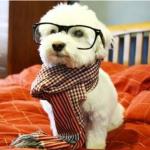 犬の咳の原因は?どんな病気?咳の種類別対処法!