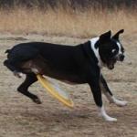 愛犬の歩き方がおかしい!変と感じたら疑える病気は?