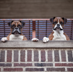 犬をマンションで飼う時に注意すべき3つのこと~ベランダ編~