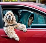 犬も車酔いをする!?酔い止めの薬は?車に慣れさせる方法は?