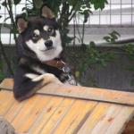 犬を屋外で飼育するのはいけない?理由と対応策は?