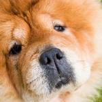 犬の選び方!飼育環境から飼える犬を選ぼう