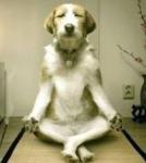 老犬の介護に疲れる前に!介護用品を使って負担を軽減!