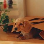 子犬の飼い方~初めてきた日の過ごし方と注意点