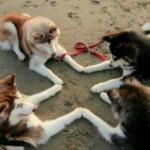 犬を多頭飼いする時に相性をよくさせる方法!
