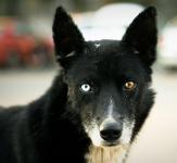 愛犬の病気予防!体型や特徴別のかかりやすい病気は?