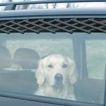 犬とのドライブ注意したい3つのこと!あると便利グッズ!