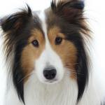 犬の鼻(鼻腔)と肝臓など腹腔にできる癌の症状は?