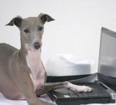 犬の皮膚にできるがん(腫瘍)の症状は?悪性・良性どっち?