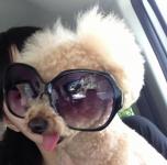 犬も日焼けをするの?日焼け止めはするべき?