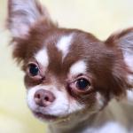 犬の骨折や骨肉腫など骨の病気の症状は?
