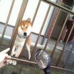 サインに気づいて!犬が服従心を表すポーズは?安心し信頼している時のしぐさは?