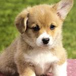 愛犬に甘えるペット依存症にならないためには?
