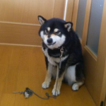 犬が唸る、噛むなど攻撃的になる理由は?犬にも反抗期があるの?