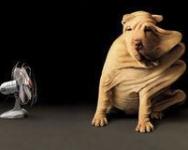愛犬の健康管理!気をつけたい季節に合わせた病気対策は?