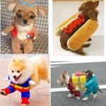 小型犬は飼いやすい?ルーツと性格から見る飼いやすい犬種