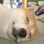 犬が吠える・噛むなど問題行動の原因(理由)と対処法!