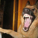愛犬の口臭・出血の原因は?!口腔の癌(がん)や病気について