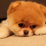 犬が首をかしげる理由は?ため息もつくの?