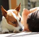 愛犬を動物病院に連れて行く時、持っていく物と伝えるべきこと