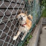 犬に関する法律 | 犬は物?トラブルを避けるために覚えておくこと