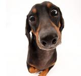 犬の目の病気   結膜炎と角膜炎の症状と治療は?