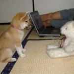 愛犬がおすわりや待て、伏せができないのはなぜ?