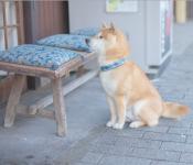 愛犬をペットショップに連れて行く時にしてはいけない3つのこと!