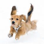 愛犬との旅行でやってはいけない3つのこと!忘れやすい持ち物とは?