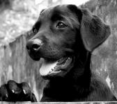 捨て犬を保護したら飼ってもいい?法律的に問題ない?