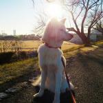 耳の病気になりやすい犬種と特徴は?予防と注意点