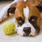 すぐ興奮するタイプの犬のしつけ方は?暴走犬にしない方法!