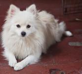 犬を賃貸住宅で飼うには?一戸建てならいい?退去の時はどうする?