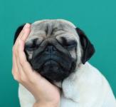 愛犬がアレルギー?原因と症状は?