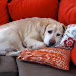 犬のアレルギー検査ってなにをするの?費用はどのくらい?