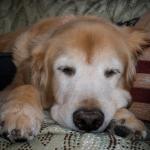 おとなしくてテンションの低い落ち着きすぎる愛犬の育て方は?