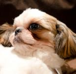 テンションの低い愛犬をおっとり犬にする方法は?