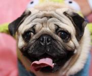 犬のアレルギー性皮膚炎を徹底解明!原因から家庭でのケアまで