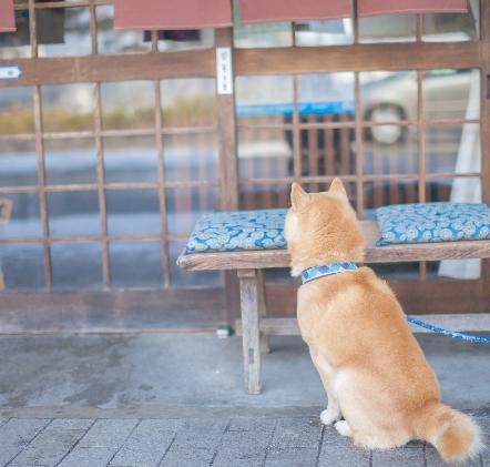 ペットフードでアレルギー?愛犬の食物アレルギーの症状とは?