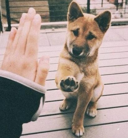 掃除の悩み解決!犬がなめても大丈夫な掃除に使える食材とは?