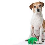 ぬいぐるみやゴム製の犬のおもちゃのお手入れは?おもちゃの洗い方!