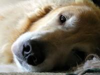 犬が吐く!嘔吐の種類や原因は?対処法からケアまで徹底解説