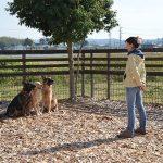 犬のしつけ【しほ先生インタビュー】日本と海外の違いとは?